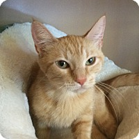 Adopt A Pet :: Ginger - Kingston, WA