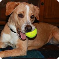 Adopt A Pet :: Katia - SOUTHINGTON, CT