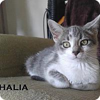 Adopt A Pet :: Thalia - Speedway, IN