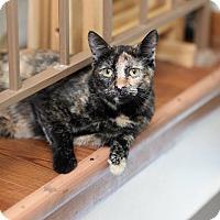 Adopt A Pet :: Zsa Zsa - Des Moines, IA
