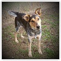 Adopt A Pet :: BAILEY - Medford, WI