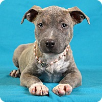 Adopt A Pet :: Nola - Palmyra, PA