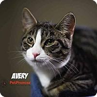 Adopt A Pet :: Avery - Columbus, OH