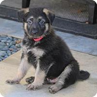 Adopt A Pet :: Harper - San Diego, CA
