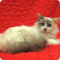 Adopt A Pet :: Aria - Redwood Falls, MN