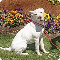 Adopt A Pet :: Maddie - Aiken, SC