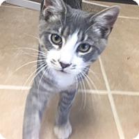 Adopt A Pet :: Annabella - Griffin, GA
