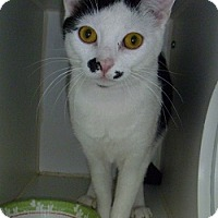 Adopt A Pet :: Maggie - Hamburg, NY