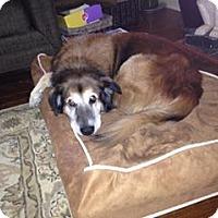 Adopt A Pet :: Lenny - Sharon Center, OH