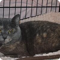 Calico Cat for adoption in Mt. Airy, North Carolina - Violet