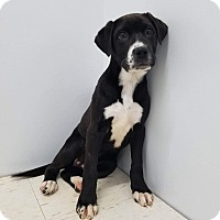 Adopt A Pet :: Kel - Patterson, NY