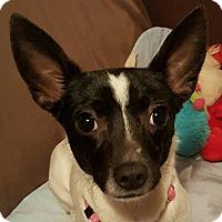 Adopt A Pet :: Fiona - Duluth, GA