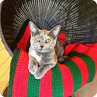 Adopt A Pet :: Fila - St. Louis, MO