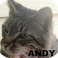 Adopt A Pet :: ANDY - Crescent City, CA