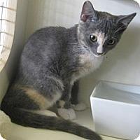 Adopt A Pet :: Nakita - Dallas, TX