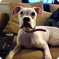 Adopt A Pet :: Gunther - St. Robert, MO