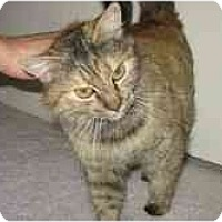 Adopt A Pet :: Greta - Davis, CA