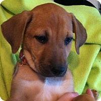 Adopt A Pet :: Giada - Phoenix, AZ