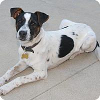 Adopt A Pet :: Colby - Burbank, CA