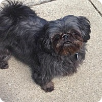 Adopt A Pet :: Sammie - Elkhart, IN