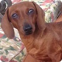 Adopt A Pet :: Prissy Pinklady - Houston, TX