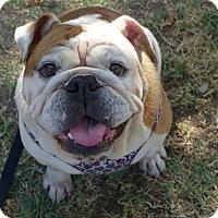 Adopt A Pet :: Leche - Santa Ana, CA