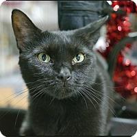 Adopt A Pet :: Carabbit - Trevose, PA
