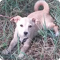 Adopt A Pet :: Dobby - Leming, TX