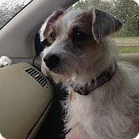 Adopt A Pet :: Queenie ADOPT PENDING - San Antonio, TX