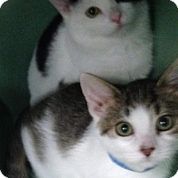 Adopt A Pet :: Magneto - Colorado Springs, CO