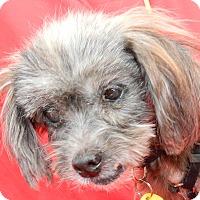 Adopt A Pet :: Sari - Umatilla, FL