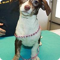 Adopt A Pet :: Asunia - Sparta, NJ