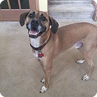 Adopt A Pet :: Oscar - Avon, OH