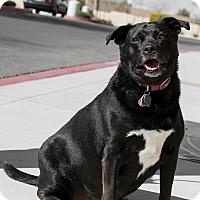 Adopt A Pet :: Sweetie - Las Vegas, NV