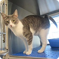 Adopt A Pet :: Dakota - Fort Worth, TX