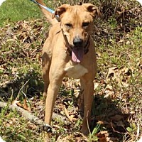 Adopt A Pet :: Kane - Wooster, OH
