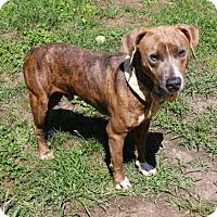 Adopt A Pet :: ASHTON - Houston, TX