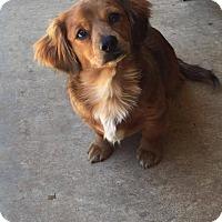 Adopt A Pet :: Porter - Barrington, RI