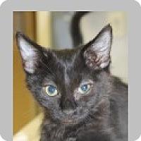 Adopt A Pet :: Phoenix - Pittsboro, NC