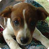Adopt A Pet :: Jennie - Staunton, VA