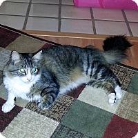 Adopt A Pet :: Sammy - Courtesy Posting - Gilbert, AZ