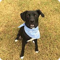 Adopt A Pet :: Bo - PORTLAND, ME