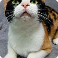 Adopt A Pet :: Malibu - Champaign, IL
