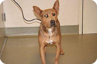 Shepherd (Unknown Type) Mix Dog for adoption in Wildomar, California - Doug