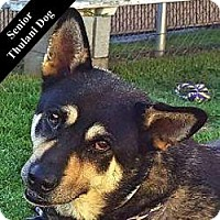 German Shepherd Dog Mix Dog for adoption in Cupertino, California - Sassy T.