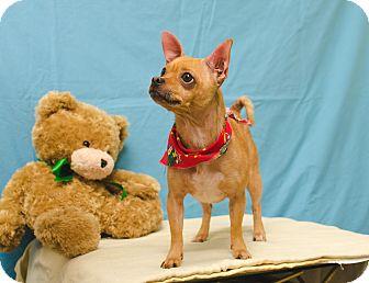 Chihuahua/Pug Mix Dog for adoption in Poteau, Oklahoma - SANDI
