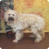 Adopt A Pet :: REMINGTON - Louisville, KY