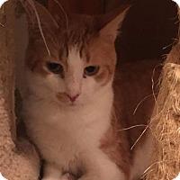 Adopt A Pet :: Cameron - Mount Laurel, NJ