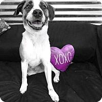 Adopt A Pet :: Sampson - Conroe, TX