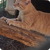 Adopt A Pet :: Citrus - Gaffney, SC